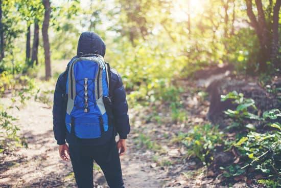 bosco avventura
